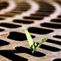 Little Plant-22.jpg